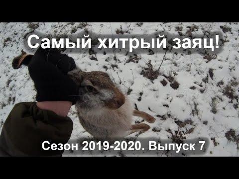 Самый хитрый заяц! Сезон 2019-2020. Выпуск 7