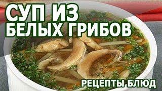 Рецепты блюд. Крем Суп из белых грибов рецепт приготовления