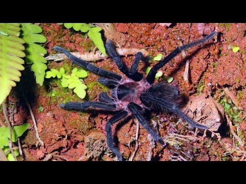 Creatures of the Night in Costa Rica - Fruit bats, millipedes, lizards, spiders and more!