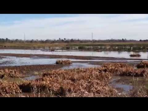 Bicycling Beaumont, Texas' Tyrrell Park CatTail Marsh Fitness Trail