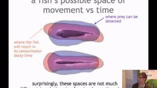 Malcolm MacIver -Sensory and Motor Spaces and the Emergence of Multiple Futures Thumbnail
