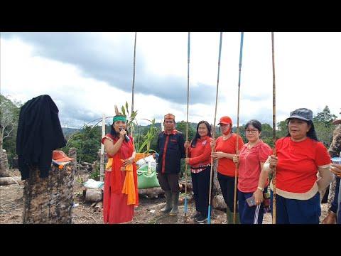 MANUGAL - Tradisi Ladang Berpindah Suku Dayak Siang