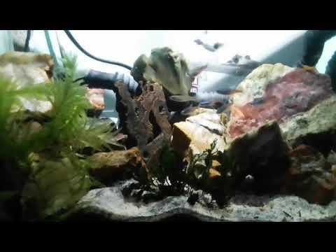 Aquascape Panorama Batu Pancawarna Youtube
