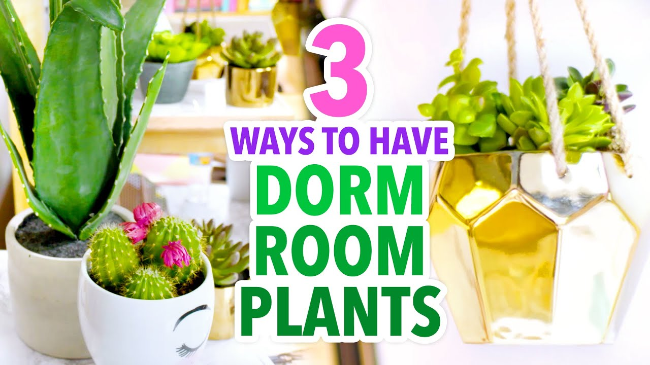 Nice 3 Dorm Room Plant Ideas   #DormRoomTakeover   HGTV Handmade   YouTube Part 10