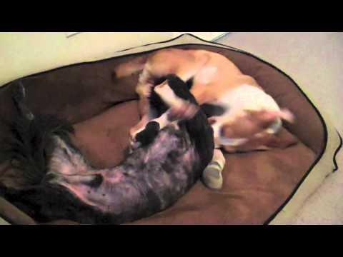 POMH Rescue 2014 Dogs