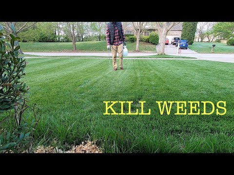 how-to-spray-weeds-in-the-lawn
