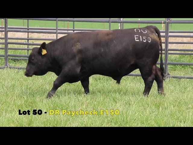 Black Gold Bull Sale Lot 50