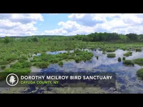 Aerial Video of McIlroy Bird Sanctuary, Cayuga County, NY (Finger Lakes Land Trust)