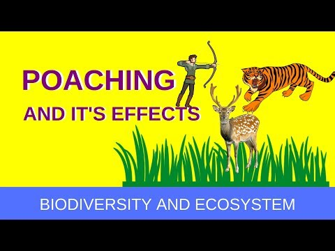 अवैध शिकार (Poaching And It's Effect)- In Hindi | Life Around Us