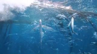 【紀錄觀點】-【海】飛魚捕撈