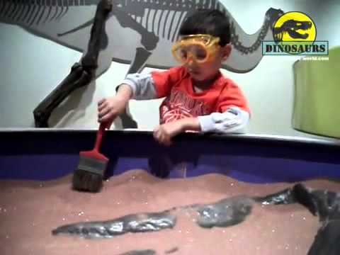 Children Finding Dinosaur Bones And Fossils Replica In The Dinosaurs Museum