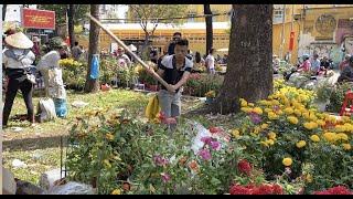 Trưa 30 Tết, người trồng hoa thà chặt bỏ, vứt xe rác chứ không bán rẻ, không cho