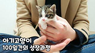 아기고양이 100일간의 성장과정