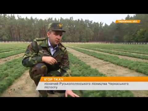 познакомится в 50 лет украине