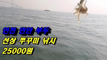 인천 연안부두 마도로스 강백호 오전 시간배 쭈꾸미 낚시