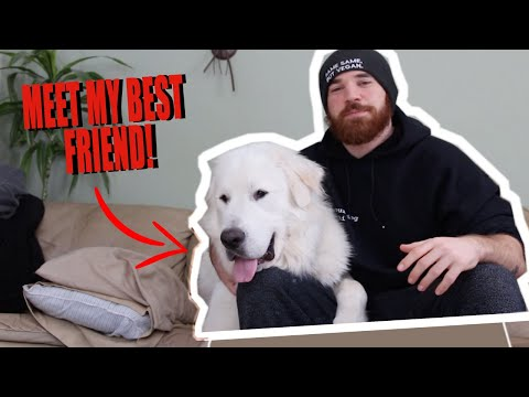 MEET MY DOG! | 150 pound Great Pyrenees rescue dog 🐶