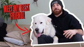 MEET MY DOG! | 150 pound Great Pyrenees rescue dog