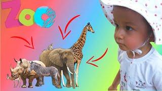 Elina Feeds Wild Animals at the Zoo | VLOG