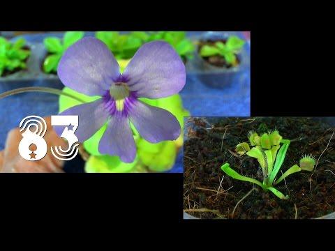 pflanzen-anzucht.-die-sämlinge-und-wie-geht-es-weiter-mit-den-exoten-und-anderen-pflanzen-teil-83