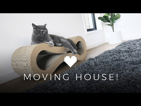 Moving House   Alfie the British Shorthair Cat