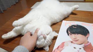 ちゃっかり雑誌に特集されるおもち猫!