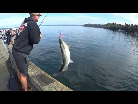 Pink Salmon Fishing 2019