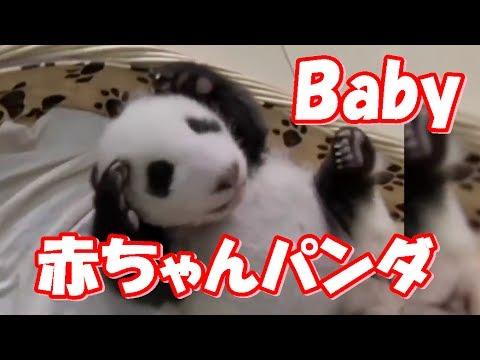 赤ちゃんパンダ可愛い~ 「絶対笑う!笑えるパンダ動画集」 / Cute Humorous Child Panda