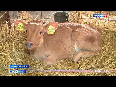 На что сделали ставку аграрии из Белинского района и не прогадали