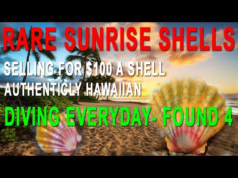 Sunrise Shell Hawaii- Sunrise Down Under, The Find, SCUBA Dive For Shells | Oahu Diving