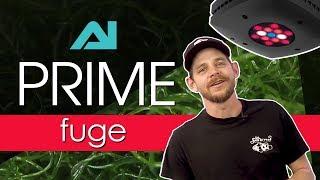 Prime Fuge Review: The Best Refugium Light We've Ever Tested—Grow Macroalgae FAST!