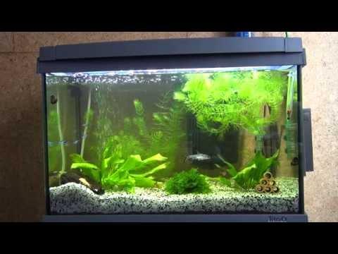 рыбки в аквариуме Tetra AquaArt 60 литров LED