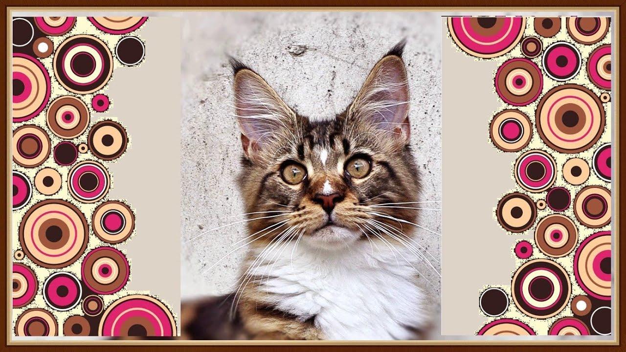 Котята мейн-куны, 14 серия.  Кот Вилли главный, Анфиса на крыше, Арчи везде
