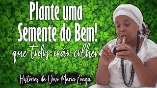 PLANTE UMA SEMENTE DO BEM QUE TODOS IRÃO COLHER   Vovó Maria Conga