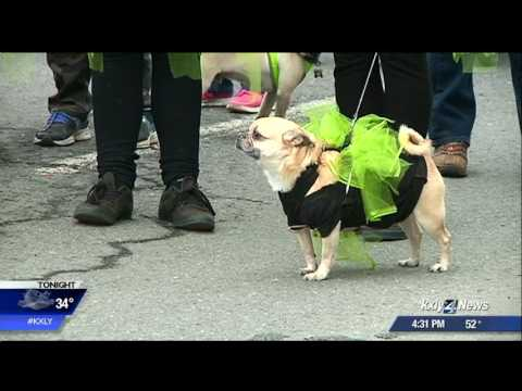 Hundreds turn out for Portland's St. Patrick's Day parade