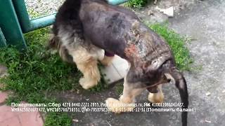 История спасения собаки не заканчивается Еще много работы