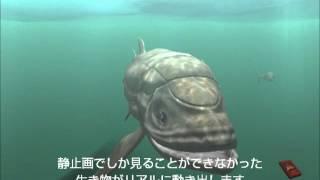 DigiFish Ancient Ocean (アンサイエント オーシャン) スクリーンセーバー