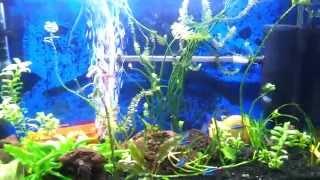 תאורת לד לאקווריום דגם  Aquarium LED lighting model SMD 5630