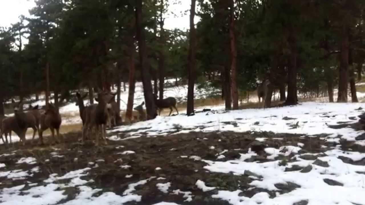 Western Colorado Big Foot - YouTube