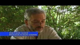 Titanic Apicole: Terreur pesticide 09