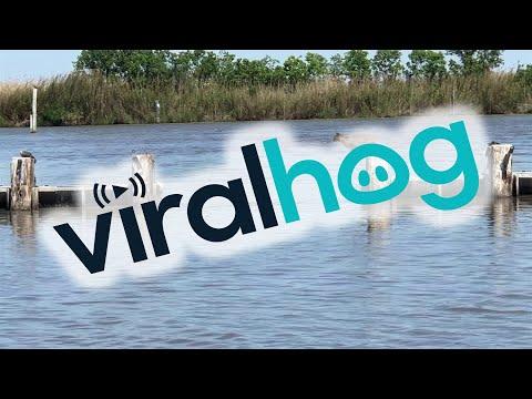Bobcat Makes Insanely Long Jump Look Easy || ViralHog