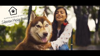 Oligoli | Siberian Husky Kennel in Bangladesh