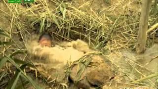 Заяц, жаренный по берлински  Анонс сериала на 31 канале