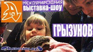 Зимние следочки 2019. Международная выставка- шоу грызунов. Exhibition show rodents