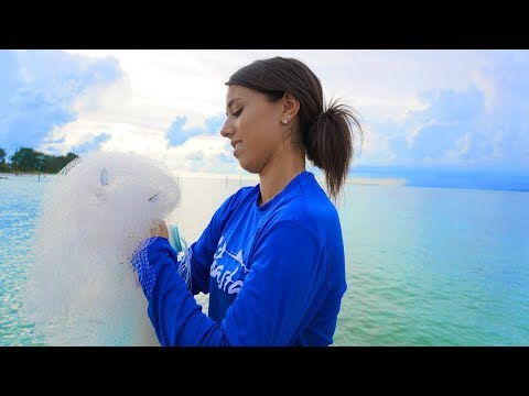 Catch Mangrove Snapper Pier Fishing (Anna Maria Island Florida)