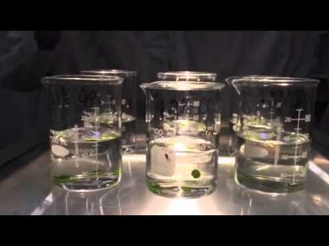 leaf disc experiment