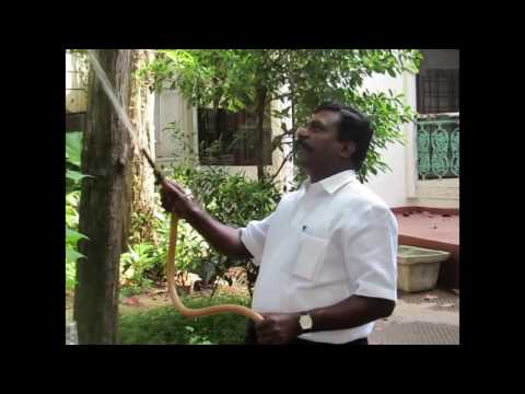 Thol Thirumavalavan-Happy moments-Watering garden-Rare Video