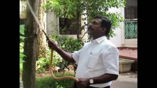 Thol Thirumavalavan-Happy moments-Watering garden-Rare Video
