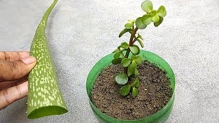 Grow any plants from cuttings using natural rooting hormone | Grow from cuttings thumbnail