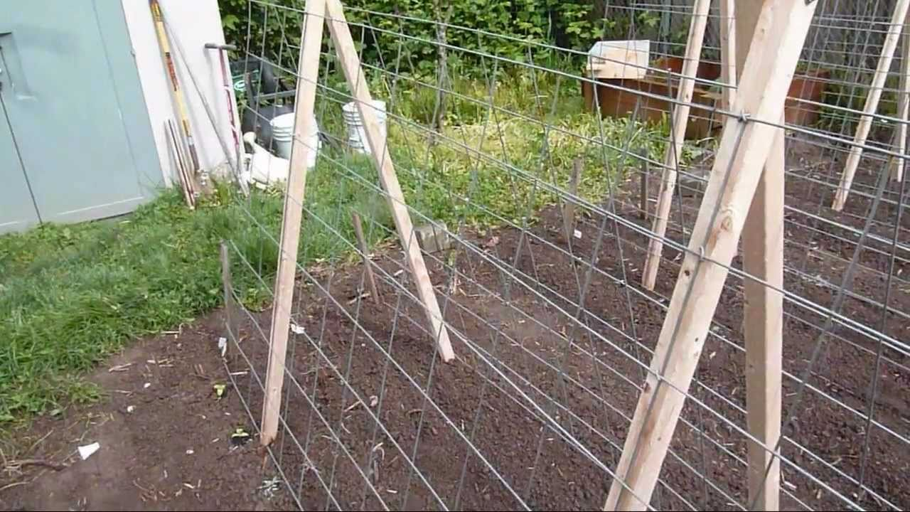 Garden Trellis For Cucumbers And Melons   YouTube