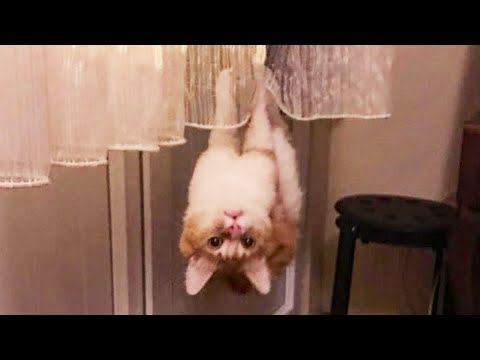 Funniest 😻 Cats and 🐶 Dogs - Try Not To Laugh 🤣 - Funny Pet Animals' Life